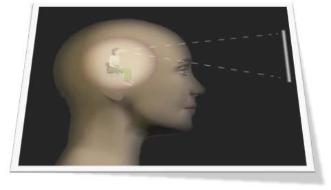 Neuroliderazgo-anclaje-emocional-en-cerebro-Marité-Rodríguez