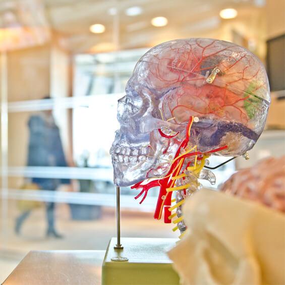 curso-neuro-marketing-persuasion-cerebro-reptil--Marité-Rodríguez