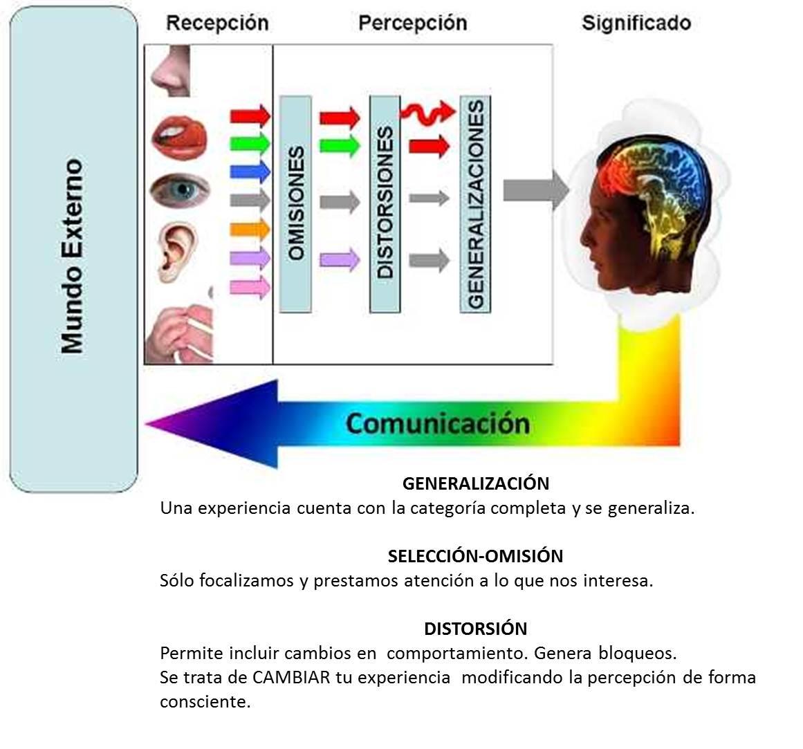 creencias-MaritéRodríguez-inteligenciacuántica-neurociencia